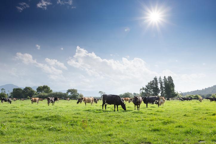 övergödning från jordbruk